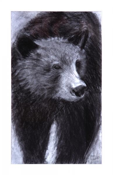 brown bear drawing by Pam Taggart