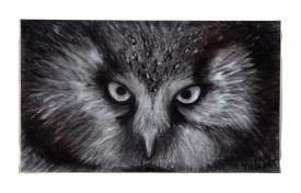 owl drawing by Pam Taggart