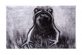 frog drawing by Pam Taggart