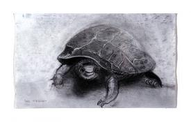 turtle drawing by Pam Taggart